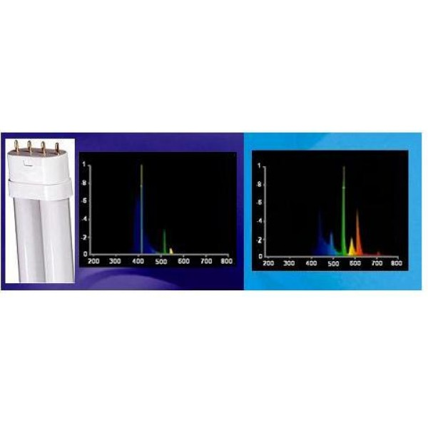 36W Compact FL 420nm Actinic/10,000K White
